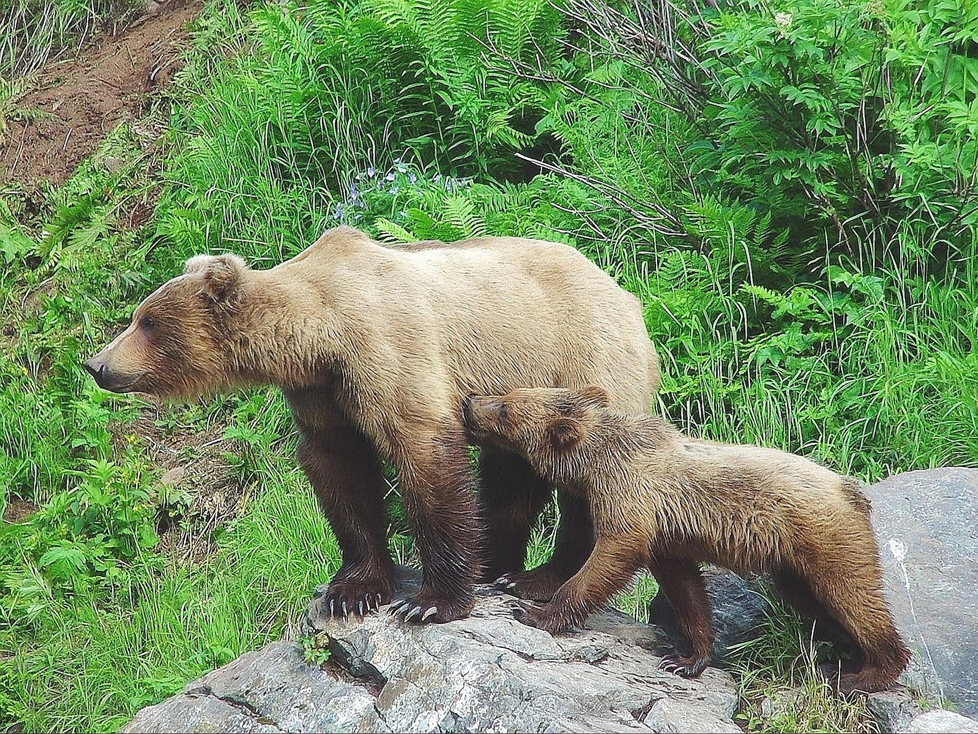 bear-623230_1920